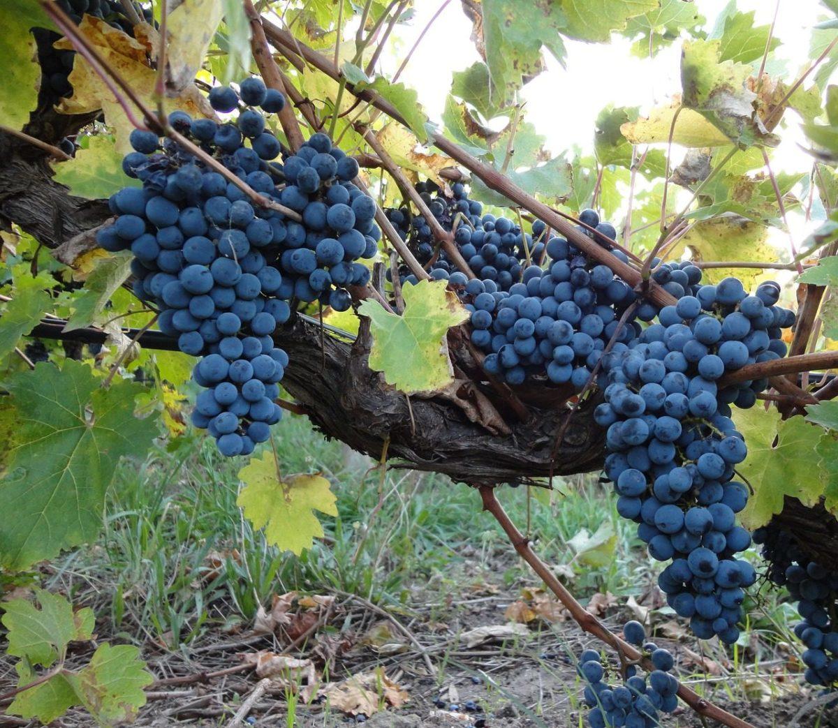 La carta dei vini della Strattoria, trattoria/ristorante ad Arona sul Lago Maggiore con etichette di pregio e prodotti tipici del territorio
