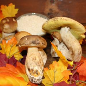 I funghi sono i protagonisti del menù d'autunno alla Strattoria, ristorante, trattoria ad Arona sul Lago Maggiore in Piemonte